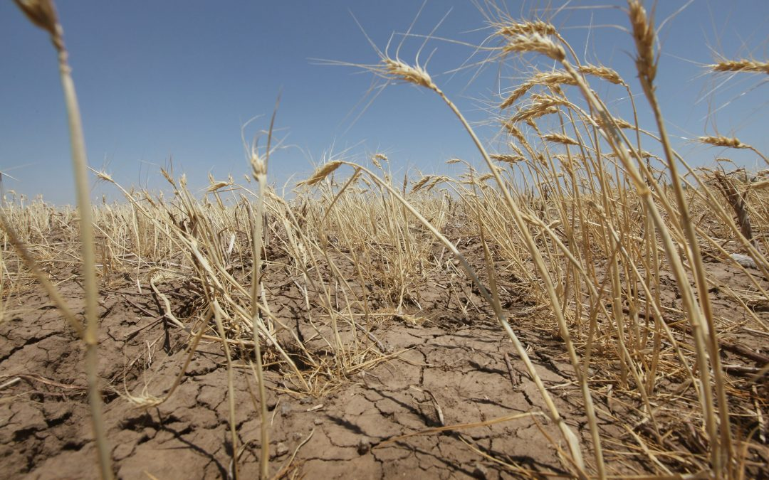 WILL 2021 BE A YEAR OF FAMINE?