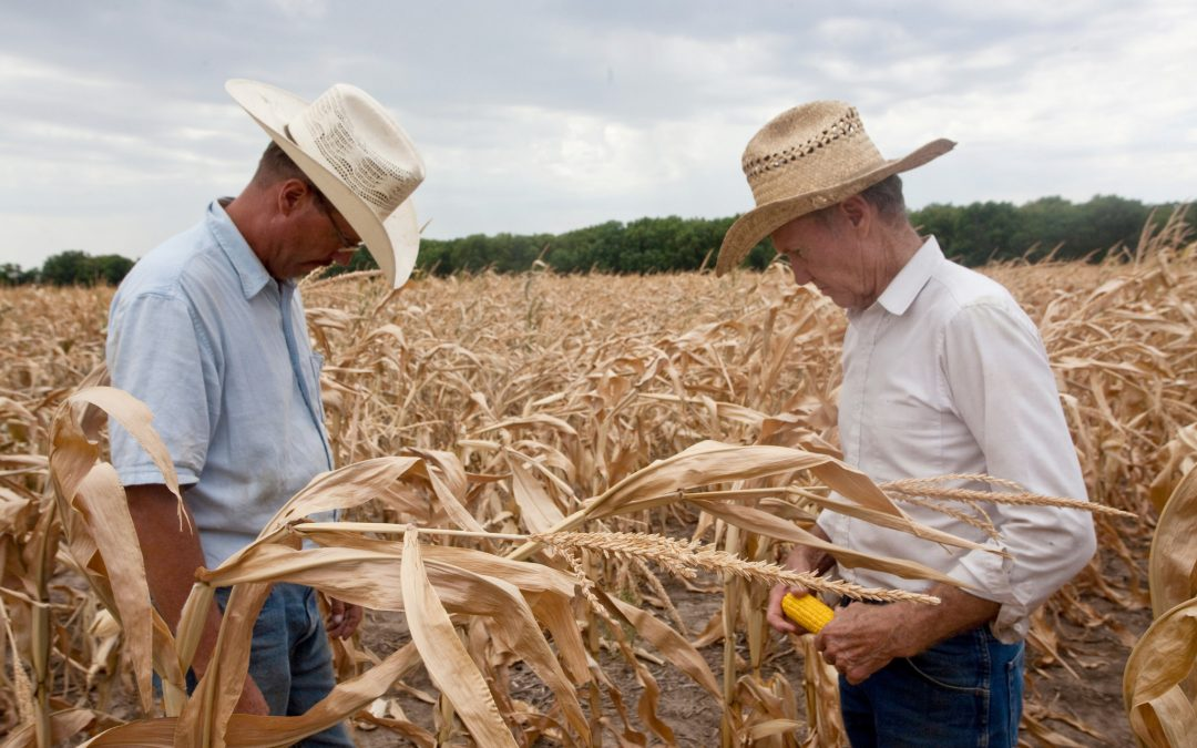 CROP PRICES SOAR AS DROUGHT KEEPS SPREADING